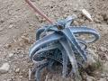 Aloe rebmannii X antoindroi