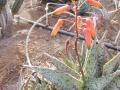 Aloe Xpink blush