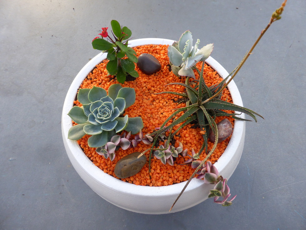 Cactuseraie de creismeas site web de la cactuseraie de for Catalogue de plantes