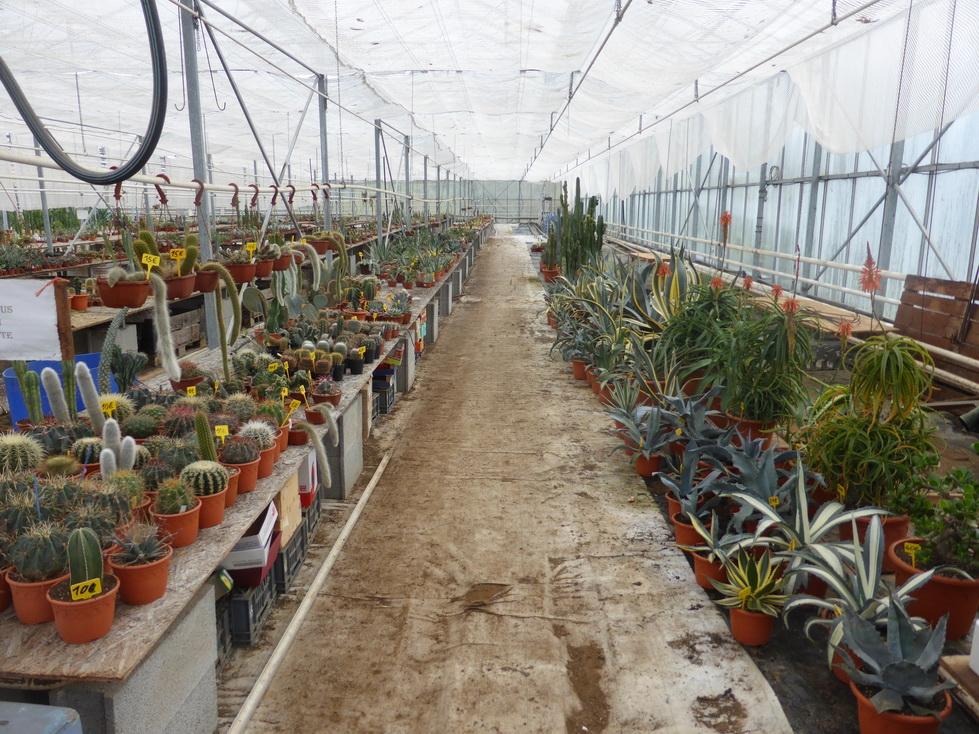 Vente de plantes cactuseraie de creismeas for Vente de plantes